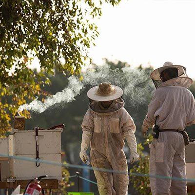 beekeepers attending to beehives